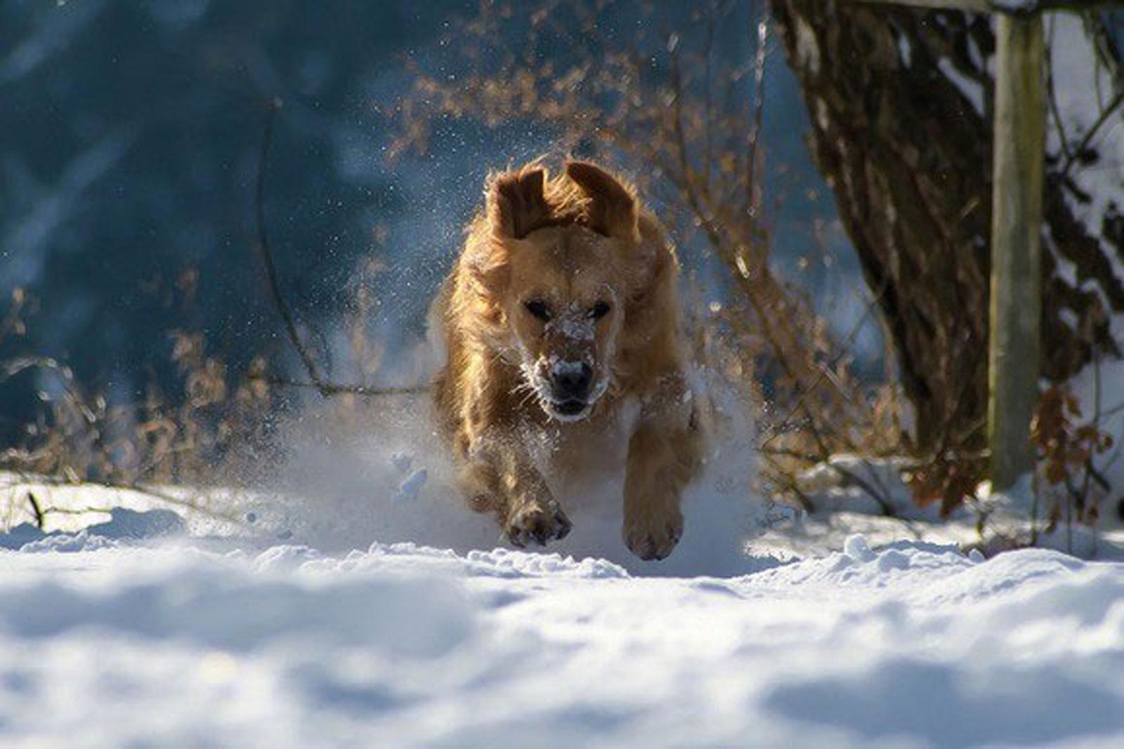 Hunde spielen gerne im Schnee – Napf Express Onlineshop Hundefutter & Katzenfutter • Tipps für Hunde • Hundefutter online kaufen Barf-Shop