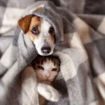 Silvester Angst Hund Napf Express Sprechstunde Tipps Hundefutter online kaufen Barf-Shop