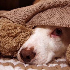Silvesterangst Napf Express Silvester Adaptil Homöopathie Hundefutter online kaufen Barf-Shop